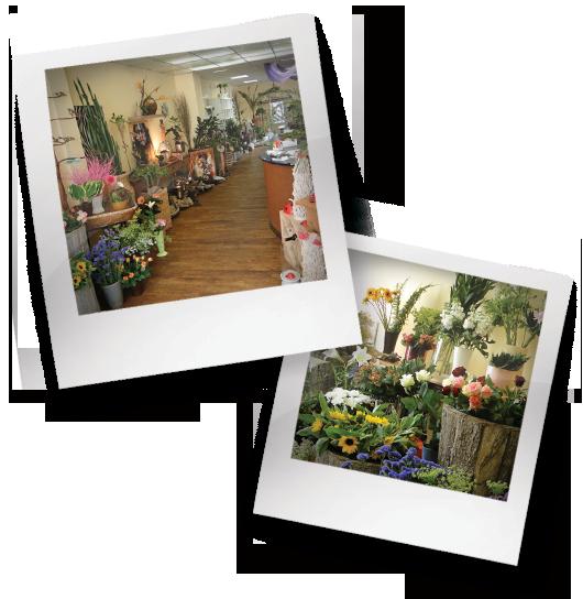 Der Blumenmarkt Schwerin